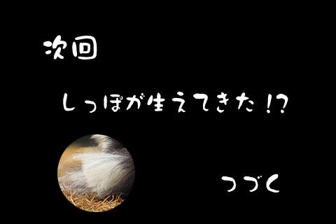 c0053844_1833386.jpg