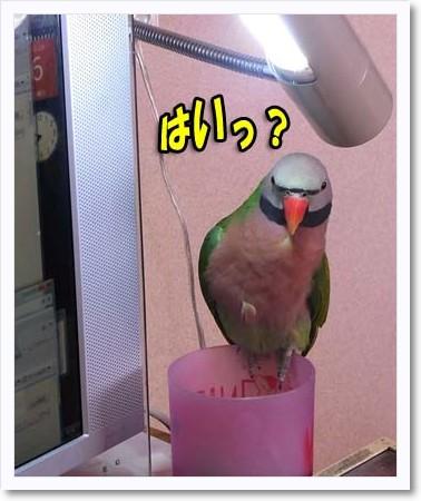 c0133013_16545790.jpg