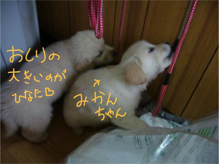 c0085188_16245592.jpg