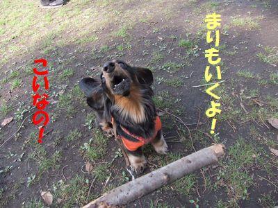 c0151866_20151639.jpg