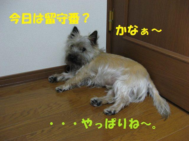 c0202659_236739.jpg