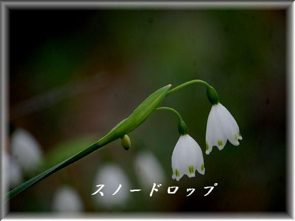 c0097309_20111529.jpg