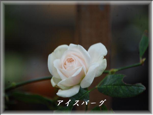 c0097309_20122232.jpg