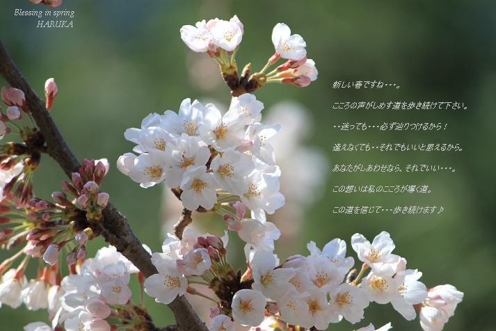 a0141400_2224562.jpg