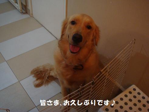 c0145615_10383536.jpg