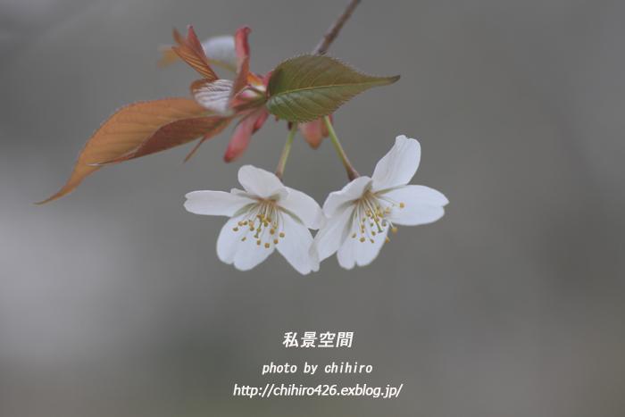 c0135535_21102613.jpg