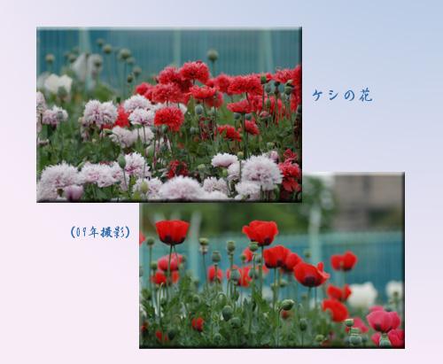 c0051105_16393577.jpg