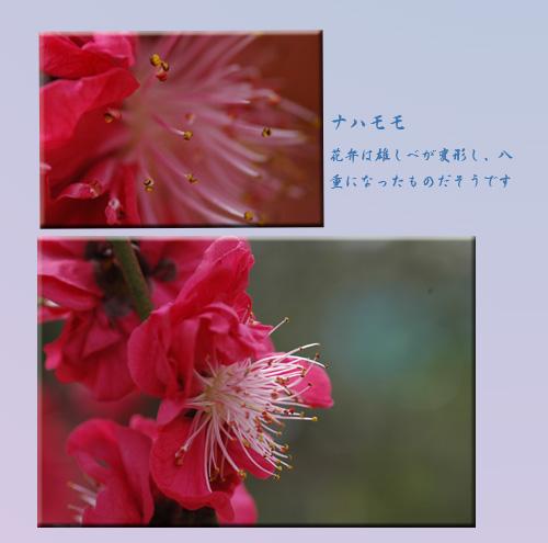 c0051105_1744473.jpg
