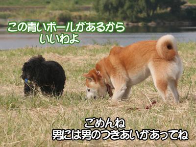 c0166018_1035110.jpg