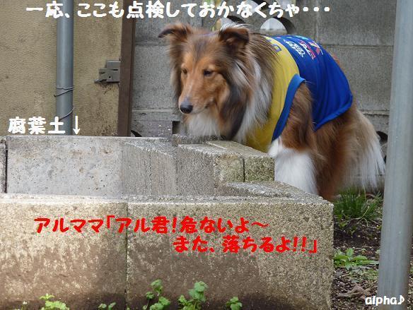 c0189388_2314577.jpg