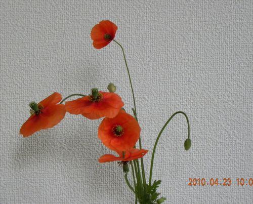 a0125705_19502674.jpg