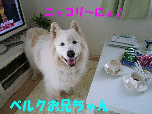 a0166954_2581141.jpg