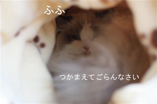 e0149299_2057059.jpg
