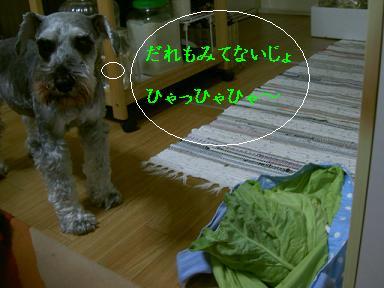 c0192319_9172648.jpg