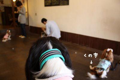 c0221462_20125047.jpg