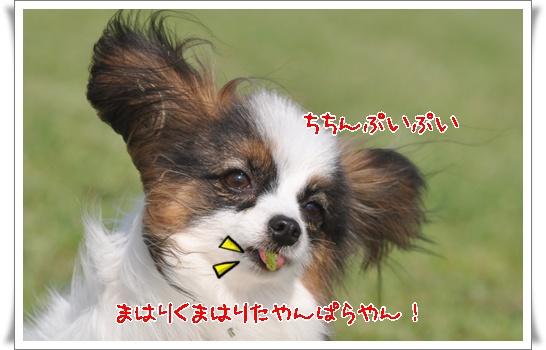 c0075585_7564047.jpg