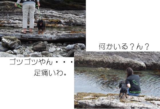 a0101958_165359.jpg
