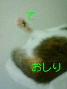 c0052756_2346622.jpg