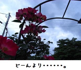 e0079796_204133.jpg