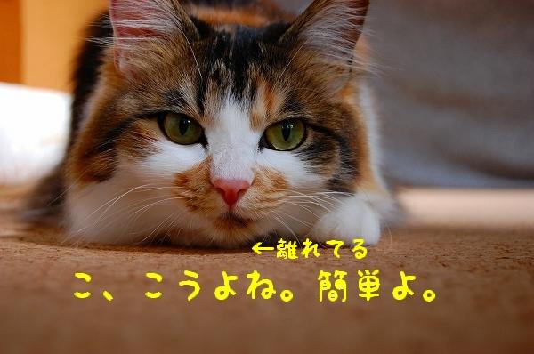 c0181639_0222670.jpg