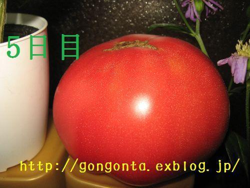 e0085147_1281680.jpg