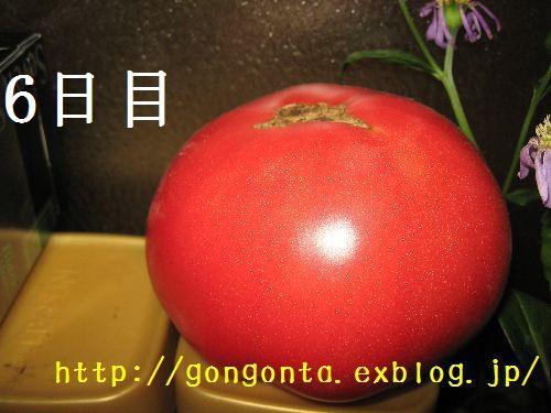 e0085147_128359.jpg