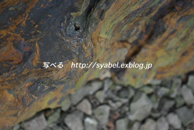 c0153764_18323911.jpg