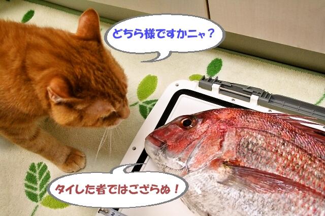 c0074067_2013941.jpg