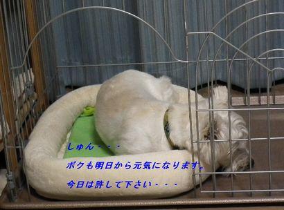 a0161111_20104682.jpg
