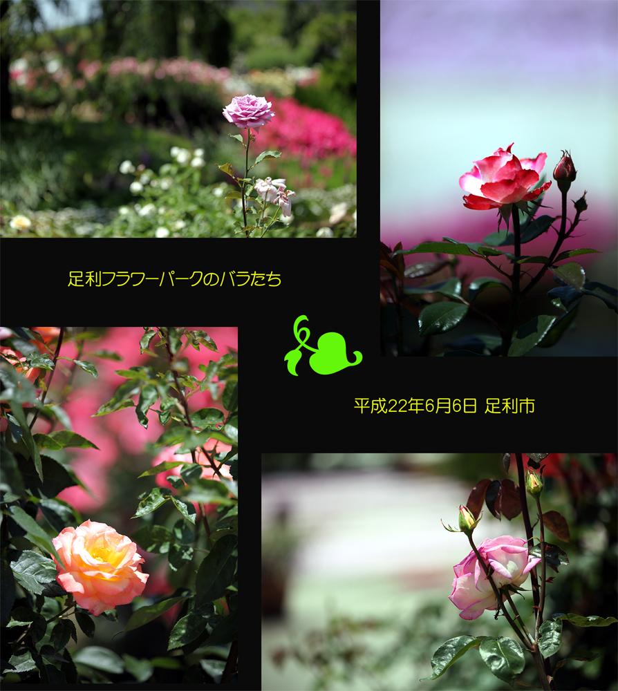 e0072638_16583231.jpg