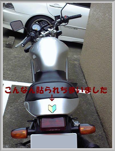 e0085899_1581073.jpg