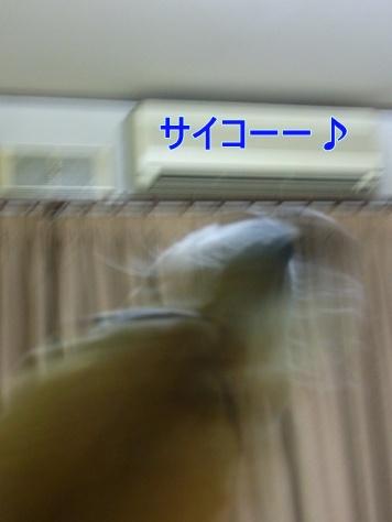 c0205806_18391155.jpg