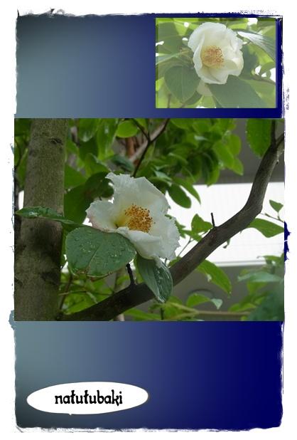 c0223117_20124532.jpg