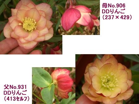 c0025140_10452795.jpg