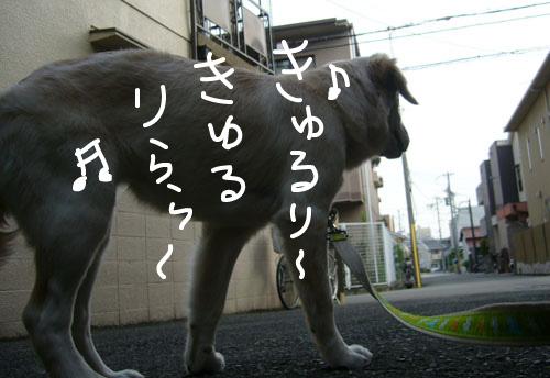 c0085188_9212174.jpg