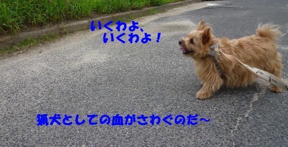 a0154801_22344960.jpg