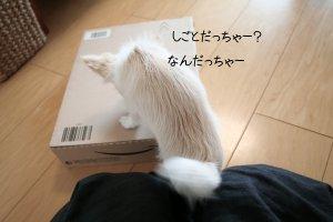 c0201883_9342256.jpg