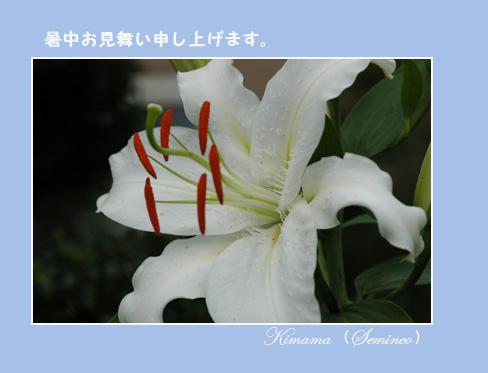 c0051105_0405442.jpg