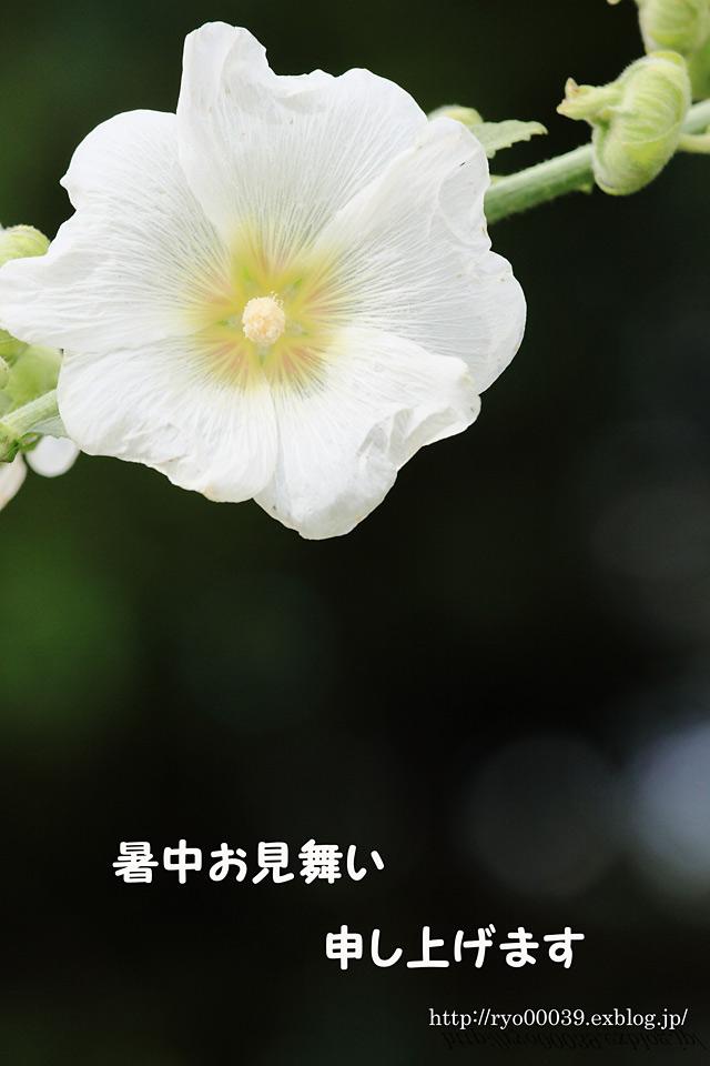 c0187571_811172.jpg