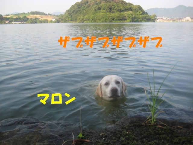 a0144266_7465085.jpg