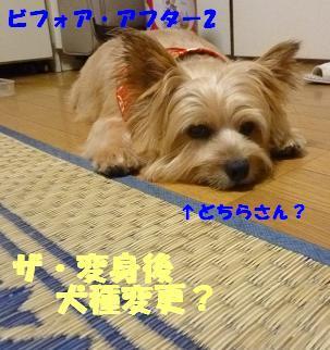 a0154801_2261167.jpg