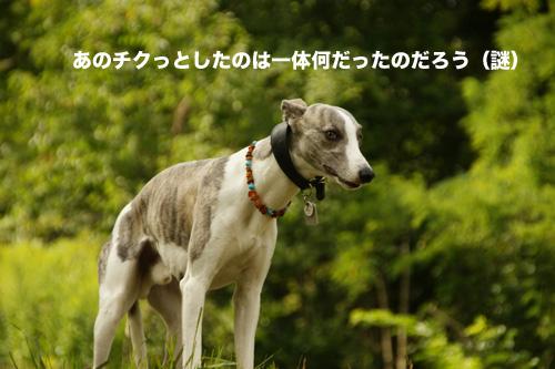 c0198524_625347.jpg