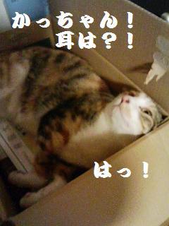 c0198560_13191877.jpg