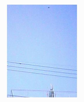 a0107685_1533353.jpg