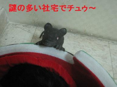 a0087146_1010331.jpg