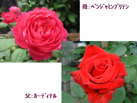 c0025140_18444178.jpg