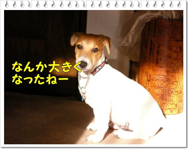 c0214384_16582033.jpg
