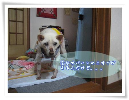 c0049950_1624428.jpg