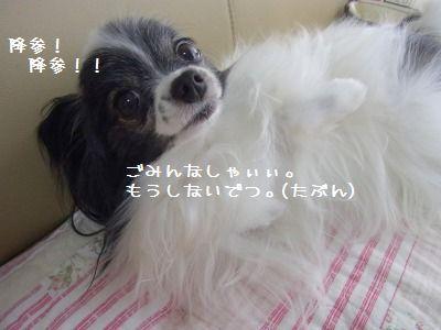 e0059267_1026436.jpg