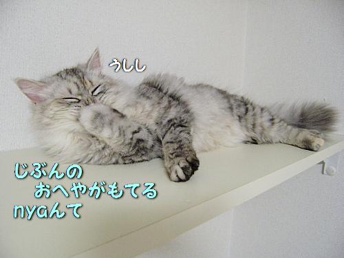 c0211109_3443132.jpg